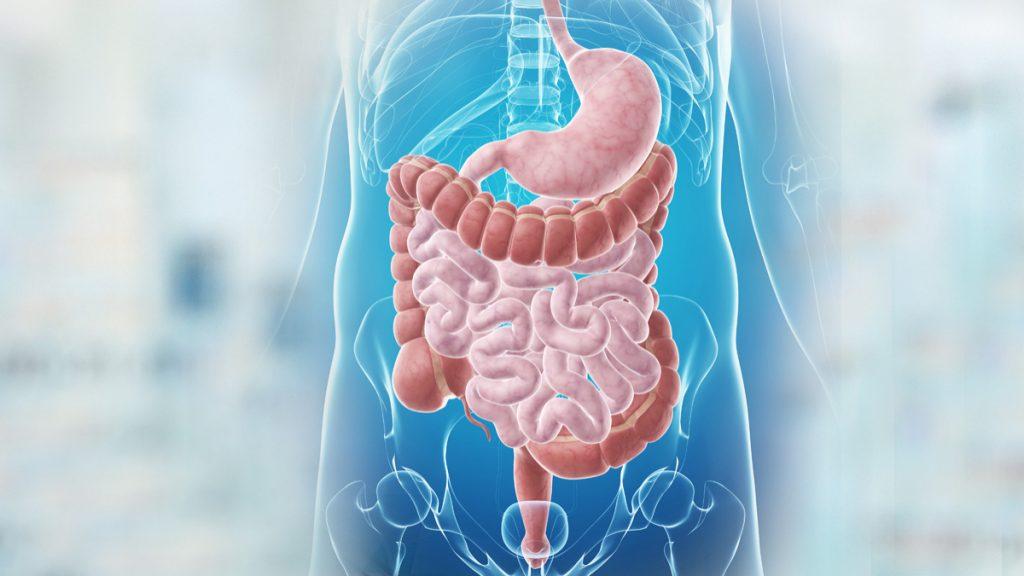 comidas digestión sistema digestivo